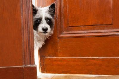 ドアの中を確認する犬