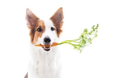 野菜を咥えている犬