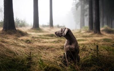 森で待つ犬
