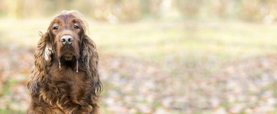 まっすぐ前を見てヨダレを垂らす犬