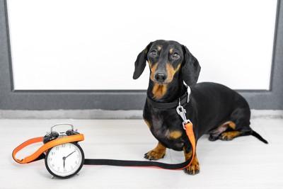 リードをつけて時計のそばで待つ犬