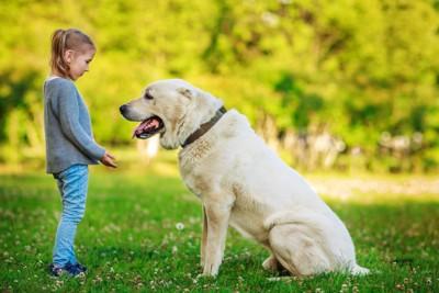 女の子と座っているアラバイ犬