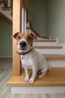 階段に座る犬