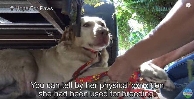 前足をつかまれた犬