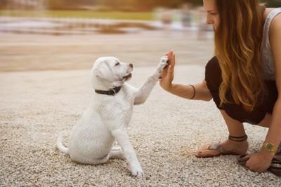 飼い主とハイタッチしている子犬