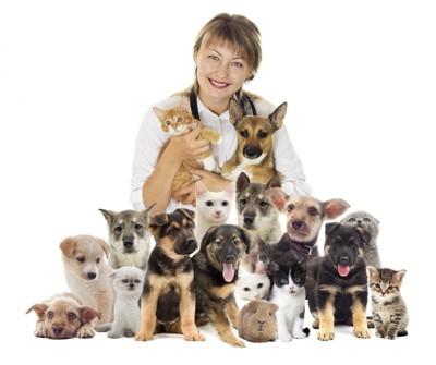 獣医と犬たち