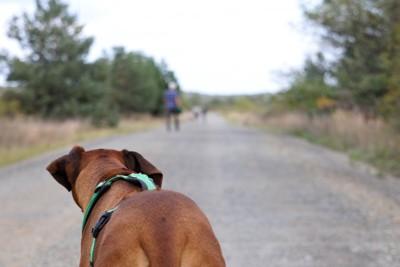 去っていく他の犬と飼い主を見つめる犬