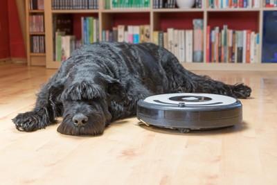 ルンバの横で寝る犬