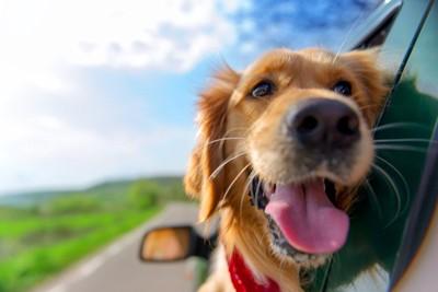 窓から顔を出す茶色い犬
