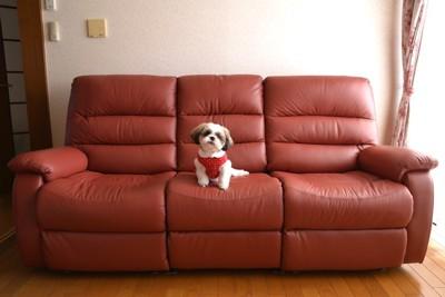ソファーの上でこちらを見つめる犬