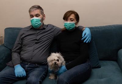 マスクと手袋を着けたカップルと小型犬