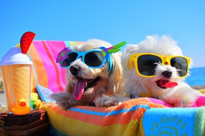 サングラスをかけている幸せそうな犬