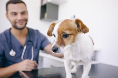診察台の上に乗る犬