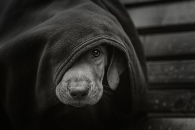 黒いブランケットに包まって怯える犬