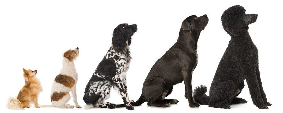 お座りした五頭の犬