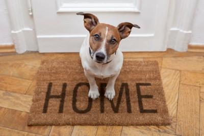 HOMEの文字が書かれた玄関マットに座る犬