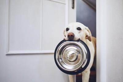 ご飯のお皿をくわえている犬