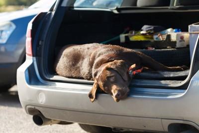 車のトランクに横になって外の空気を吸う犬