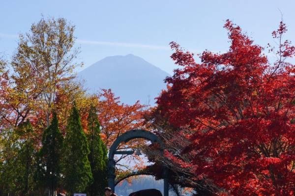 紅葉の奥に富士山