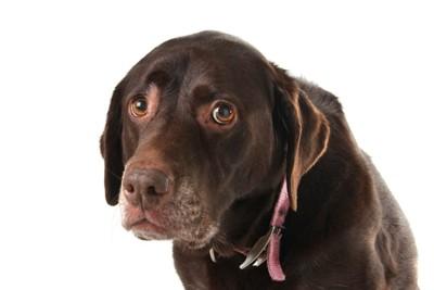 不安そうな表情の犬