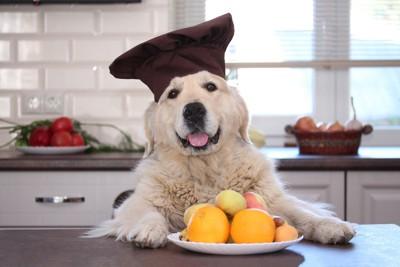 果物を前にした帽子をかぶった犬