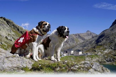 山岳救助犬