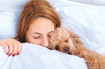 布団で眠るトイプードルと女性