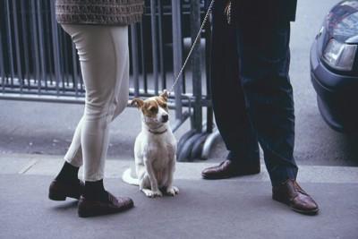 会話中の人とお座りして待つ犬