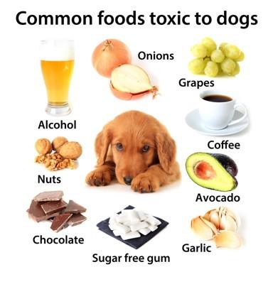 犬にNGな食べ物など