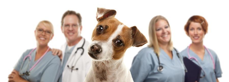 首をかしげる犬と獣医師たち