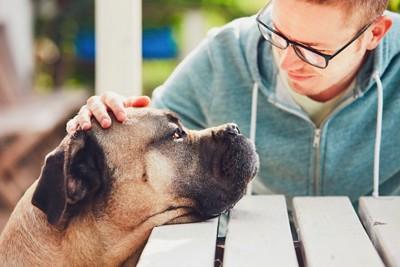 テーブルに顎をのせる犬