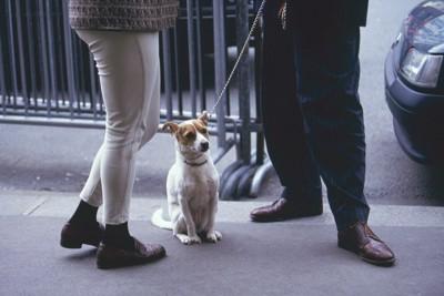 散歩中の犬と話し中の二人