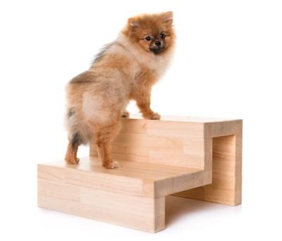階段式のドッグステップに登るポメラニアン