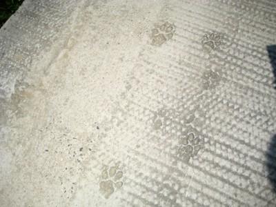 犬の足跡の写真