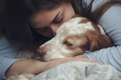 愛犬への愛情