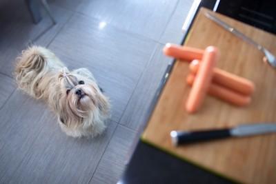まな板の上の食材を見る犬