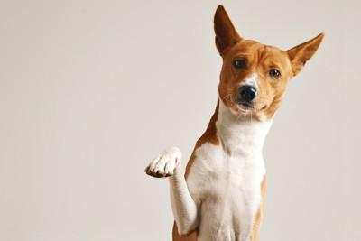 右手を上げる犬