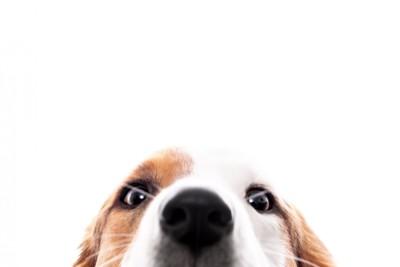 犬の鼻のドアップ