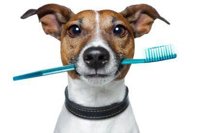 犬のゲップの元を断つ歯磨き