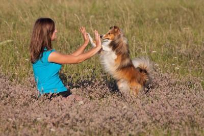 犬と飼い主がハイタッチしている写真
