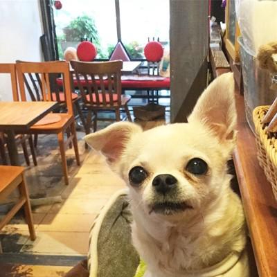 リビングカフェ 店内写真