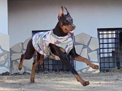 庭を走り回って喜ぶ愛犬