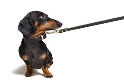 散歩中に座る犬