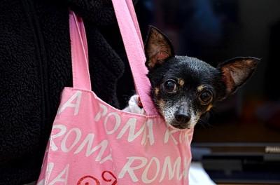 袋に入った犬