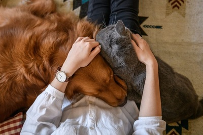 飼い主に甘えている犬と猫