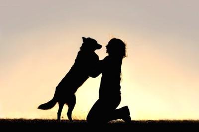 犬とじゃれあう女性のシルエット