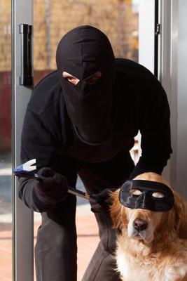 泥棒とアイマスクをした犬