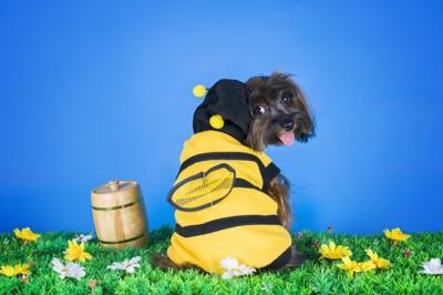 ハチの服の犬振り向き