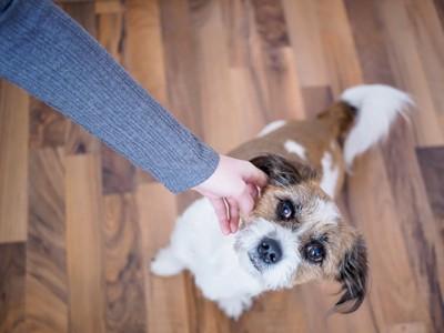 犬に手を伸ばす飼い主