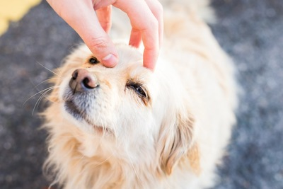見上げる犬と犬の頭に手を置く人